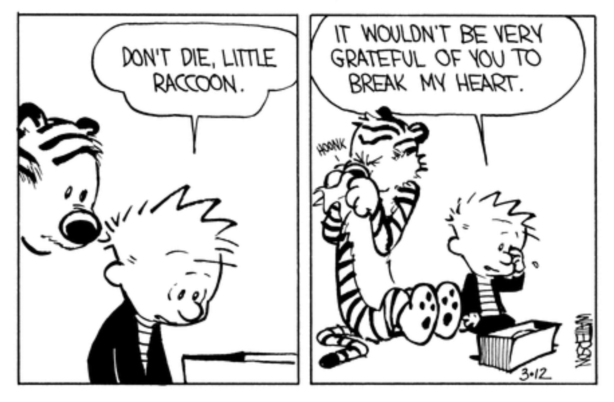 calvin hobbes dont die little raccoon